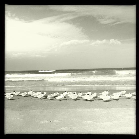 Playalinda Beach - Bird Flock Facing the Wind